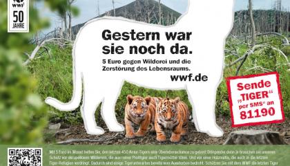 WWF_Tiger_AZ_2013