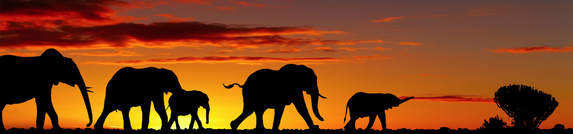 Elephant_Slider