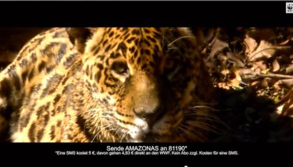 Jaguar_Beitragsbild